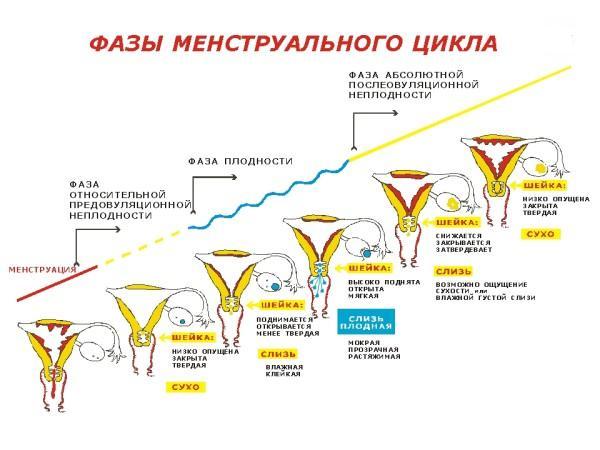 visokiy-prolaktin-i-videleniya-iz-vlagalisha